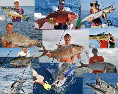 Collage - GameFish